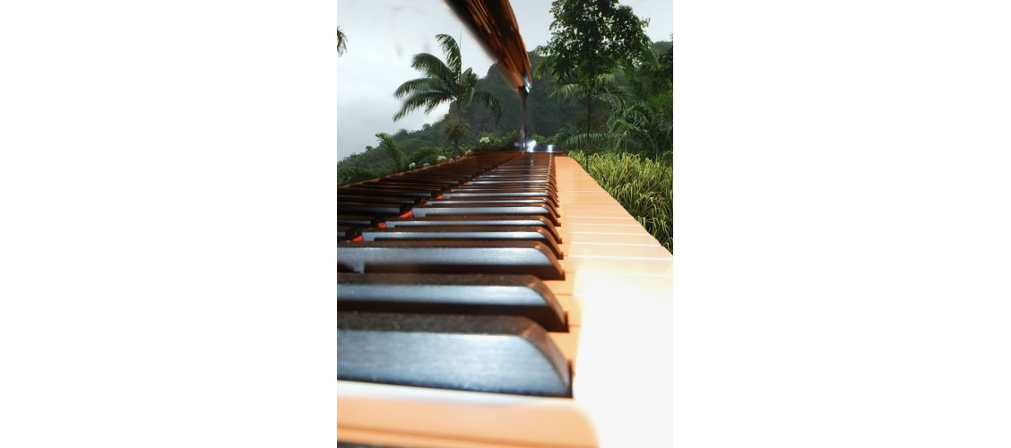 Piano keys in Jungle
